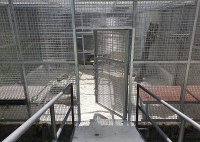 Animal Yard & Den